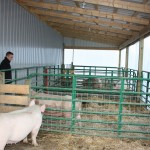 "Garrit Sproull was excited to move his sows into this lean-to, attached to a new 45-by-60 barn built for his growing farrowing operation in Harrison County. But he won his national FFA swine award with work in a hand-built pig barn so rough Sproull admits, ""I have no idea how some of those piglets lived."""