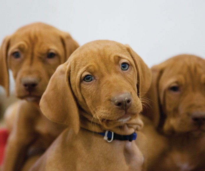 photo of puppies