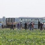 immigrants in a field with a bus