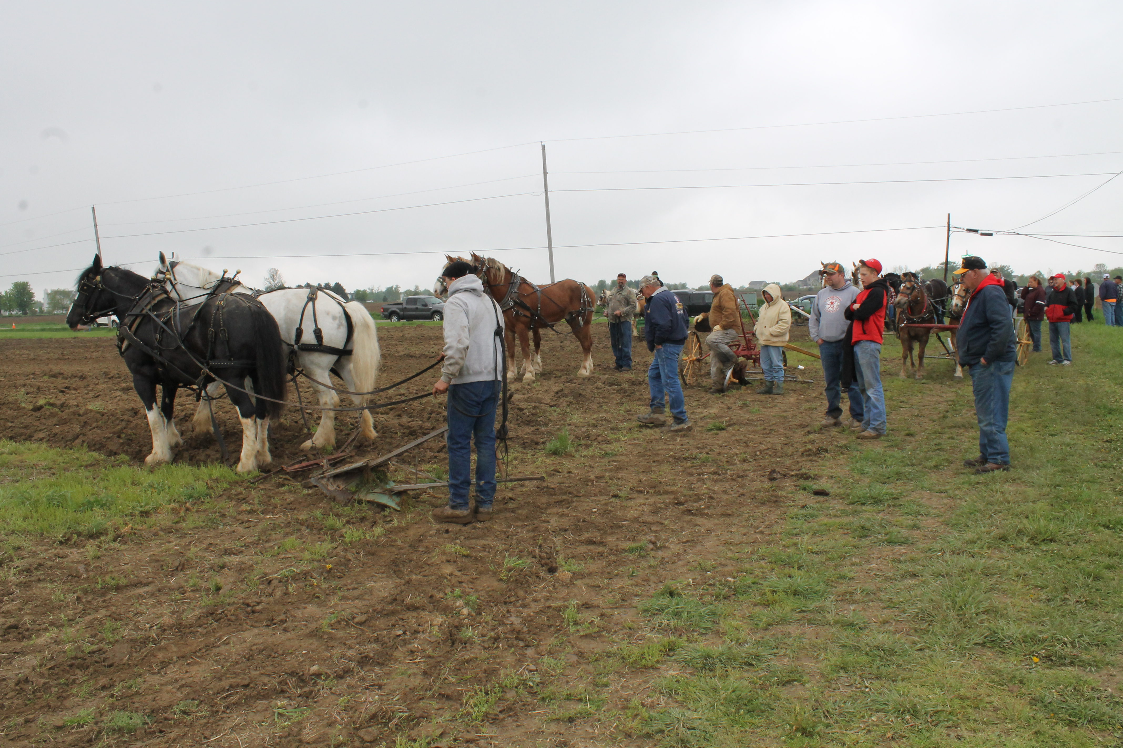 ^ Horse plowing at ohrer Farm is a spring tradition - Farm and Dairy