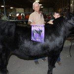 Summit Gr ch. steer