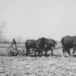 "(Submitted by Merwyn Brenner)  Brenner plowing with a tandem hitch in April, 1962, on the Dave Moving farm near East Greenville, Ohio. Wife Matilda writes, ""Merwyn still loves his horses, however he has retired now. At age 861⁄2, too much work for an old man!"""