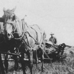 (Submitted by Gary Hemphill)  Gary Hemphill submitted this photo of his great-uncle Roy Cooper with his father's team, pulling what appears to be a binder and putting up wheat. The photo was taken in Butler Co., Pennsylvania, around 1925.