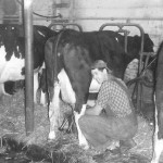 (Submitted by Lynn Miller)  Richard Miller, doing the evening milking at their Aurora, Ohio, farm c. 1955. Richard, now 92, still lives in the farmhouse and sells produce during the summer at his roadside stand.