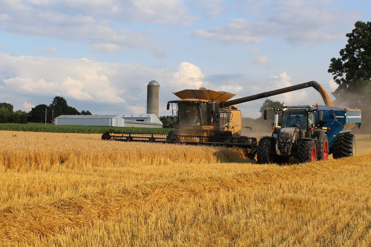 Wheat Harvest - Bing images