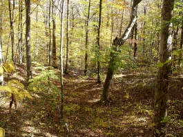 Vinton County, Ohio forest