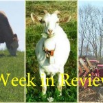 Week in Review 5/2
