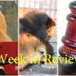 Week in Review 6/6