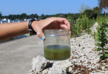 Harmful algae in a jar.