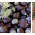 chestnut collage