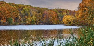 lake with trees changing colors