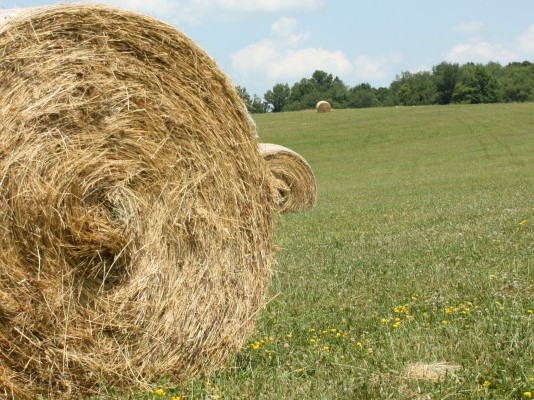 large round hay bale in field
