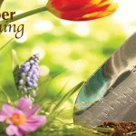 flowers and garden trowel
