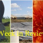 Week in Review 11/14 collage