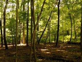 Clean Ohio Fund easement for woods