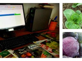 garden planning and crops collage