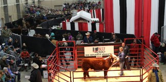 Beef Expo Hereford sale