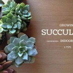 "succulents with ""growing succulents indoors: 6 tips"" text"