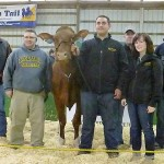 top Holstein at sale