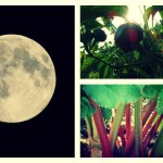 moon garden collage