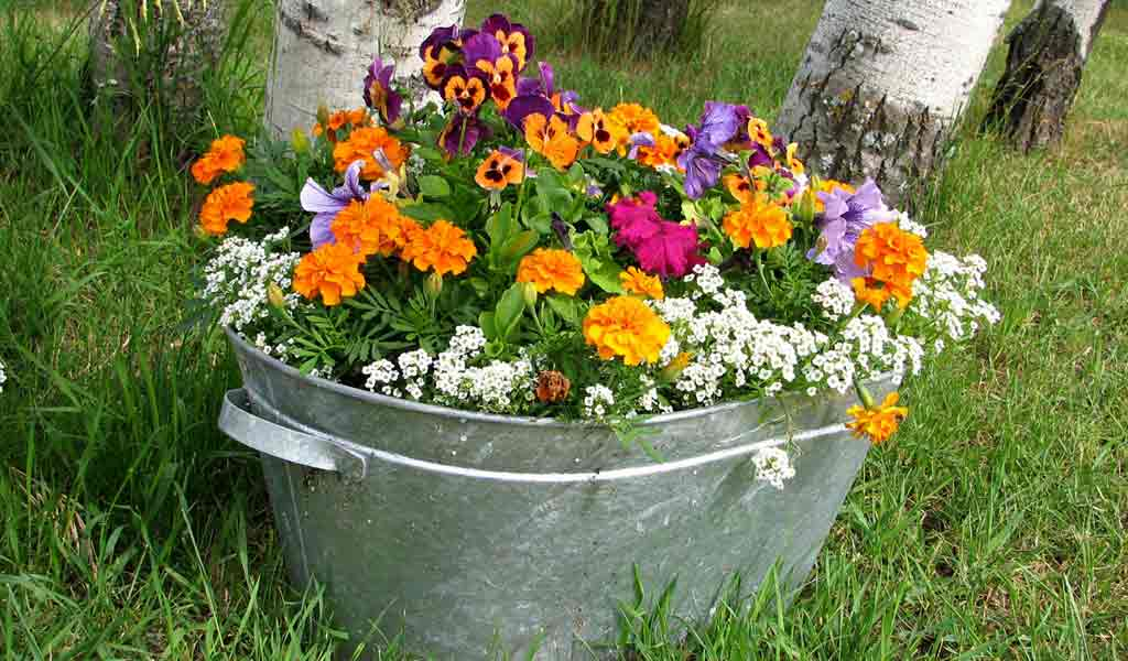Make a mother s day container garden farm and dairy for Tin tub planters