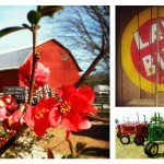 Dickie Bird Farm collage