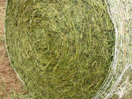 wrapped hay bale