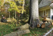 cut down tree by house