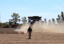 Soybean dust