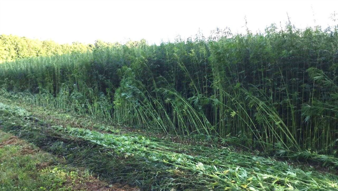 history of hemp agriculture in the united states The resolution, which was passed to commemorate hemp history week, also decries the fact that the united states is the largest consumer of hemp products in the world, but the united states is.