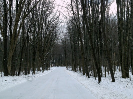 snowy road in woods
