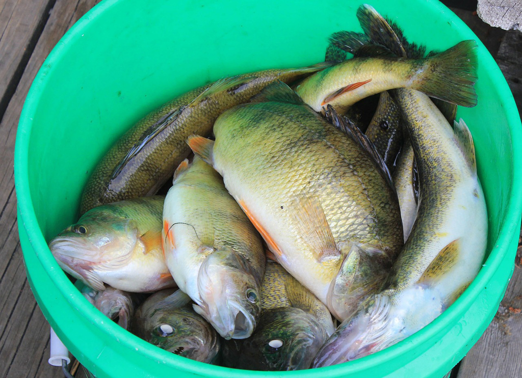 top water bass fishing about to peak farm and dairy