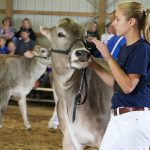 Brown Swiss convention